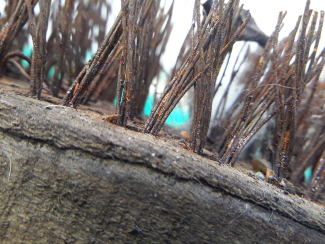 Close-up No People Day Eyeemphoto Rusty Tabletphotografie Tabletphoto Rusty Wire Wire Wire Brush