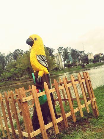 Wood Art Art Gallery Bird Photography