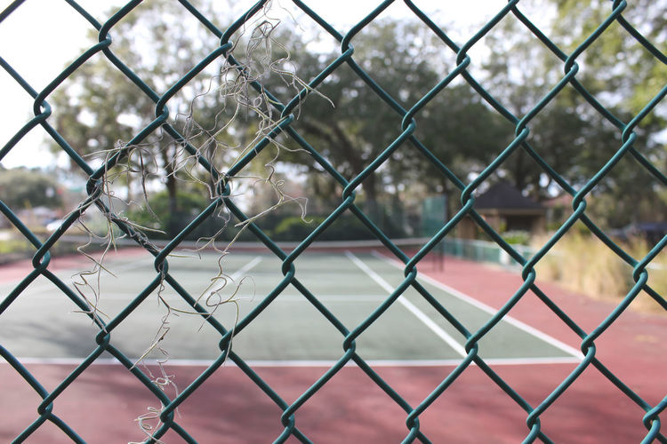 Jacksonville Spanish Moss Chainlink Fence City Close-up Day Florida Focus On Foreground Full Frame Green Fence Metal Nature No People Outdoors Sport Tennis Court
