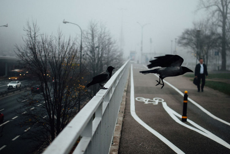 Two Crows The Week on EyeEm Capture The Moment Nikonphotography Street Photography Light And Shadow Crow Moody Animal Road Sign Animal Themes Vertebrate Bird Tree Animal Wildlife Symbol Transportation Bare Tree Day Animals In The Wild City Street Nature No People Outdoors One Animal