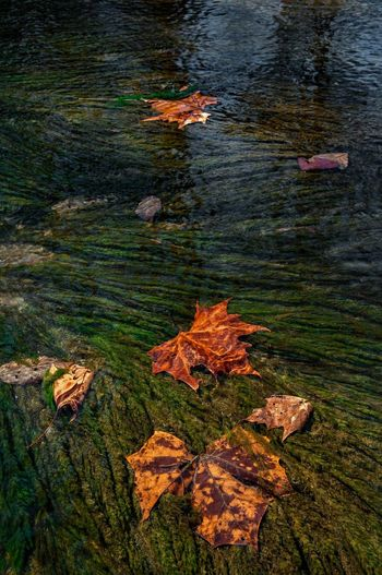 High angle view of maple leaf on lake