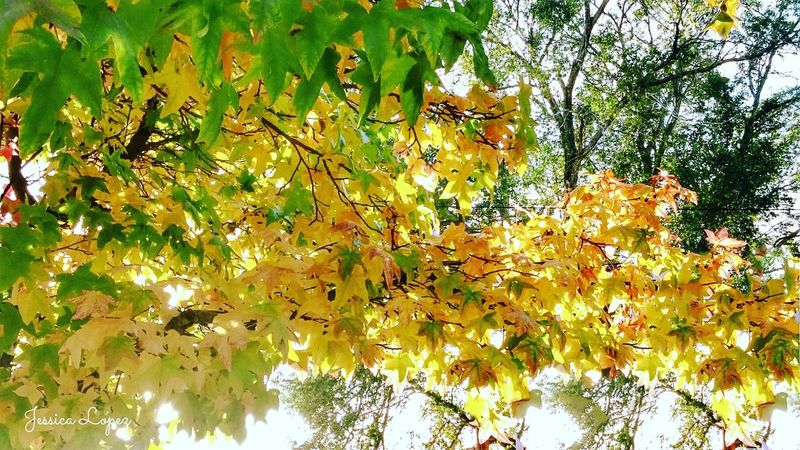 Growth Nature Green Color Close-up Yellow No People Tree Backgrounds Beauty In Nature Outdoors Autumn EyeMe Best Shot - Landscape EyeEm Best Shots - Nature