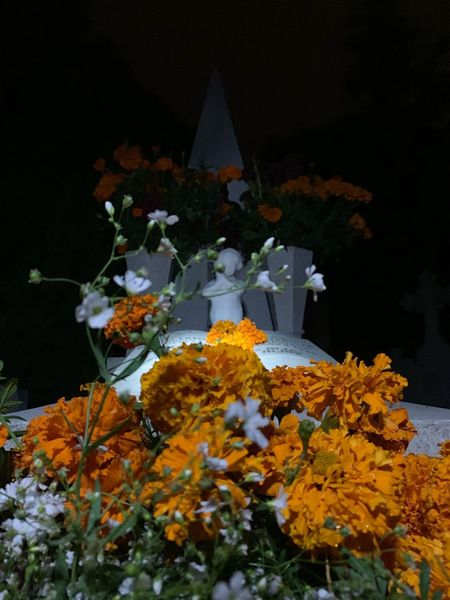 Tradición Mexico Tradition Cultures Diademuertos Plant Flowering Plant Flower No People Art And Craft Nature Belief Night Spirituality Statue