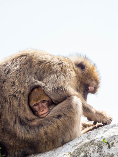 Animal Animal Themes Animal Wildlife Animals In The Wild Baboon Baby Close-up Mammal Monkey Monkeys No People Outdoors