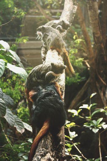London Zoo London Animals Zoo Monkey Monkeys Nature No People United Kingdom Uk England Quiet Travelling Observations