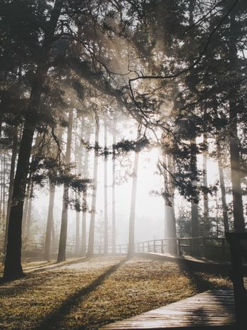 Tree Nature Fog Beauty In Nature Forest Tranquil Scene Tranquility Scenics Autumn Sunlight Day Branch Outdoors Landscape No People Tree Trunk Winter The Way Forward Growth Cold Temperature