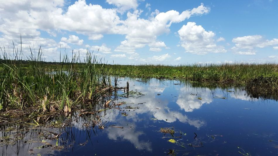 Reflection Cloud - Sky Sky Water Lake Outdoors Nature Day No People Scenics Tree Beauty In Nature Grass Animal Wildlife Animals In The Wild Everglades  Everglades, Florida Airboat Rides On The Swamps Airboat Airboat Ride Creek Photography Water Reflection Sky Reflections In The Water Sky Reflection The Week On EyeEm