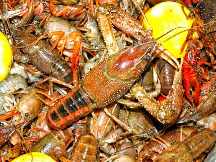 Full frame shot of crayfish cooking in pan