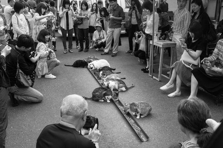 Art Blackandwhite Cat Japan Monochrome Streetphotography Phtographer EyeEmBestPics Black And White Helloworld Snapshots Of Life スナップ写真 Artな写真 モノクロ 写真家 福井県 日本 スナップ Cats ねこ