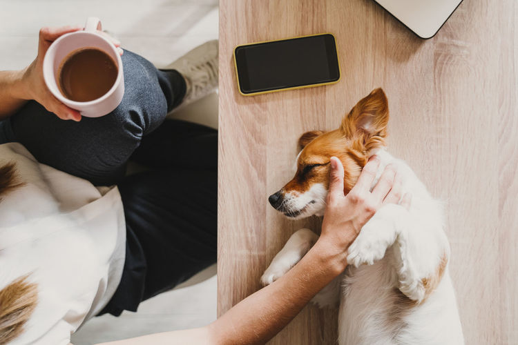 Directly above shot of woman touching dog while holding coffee cup at home