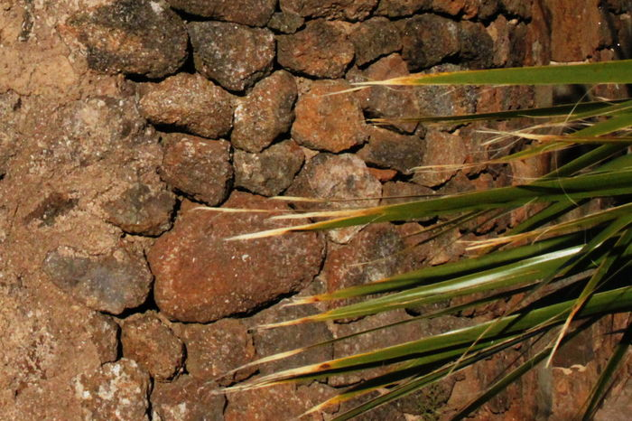 Pantelleria Built Structure Close-up Day Full Frame Shot No People October 2015 Outdoors Plam Stone Wall Textured