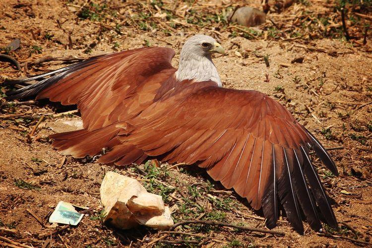 Eagle spread
