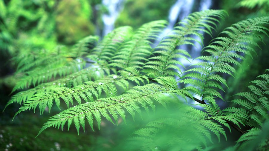 Fern forest tropical jungle close-up green lush waterfall green background