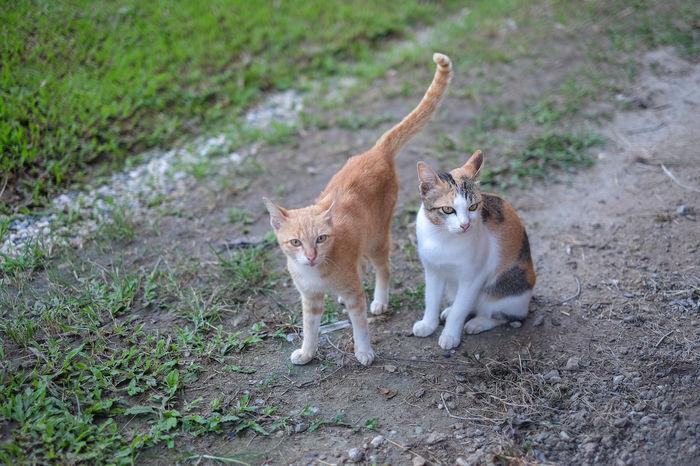 Naughty cat Family Family Cat Green Home Cat Kittens Brethren Cat Cats Mammal Naughty Cat No People Pets Two Cats