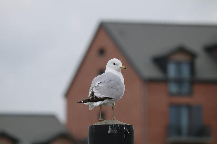 Möwe Möwe Im Flug Möwen Portrait Möwen Am See Nature Vogel Des Jahres Vogelfotografie Vogelhaus Vogelperspektive