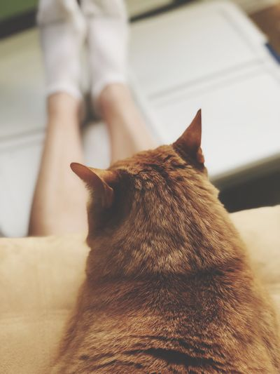 The Week on EyeEm EyeEm Selects One Animal Domestic Animals Domestic Pets Animal Themes Mammal Cat Relaxation Domestic Cat Feline Resting Focus On Foreground Indoors  One Person Animal EyeEm Selects One Animal Domestic Animals Domestic Pets Animal Themes Mammal Cat Relaxation Domestic Cat Feline Resting Focus On Foreground Indoors  One Person Animal