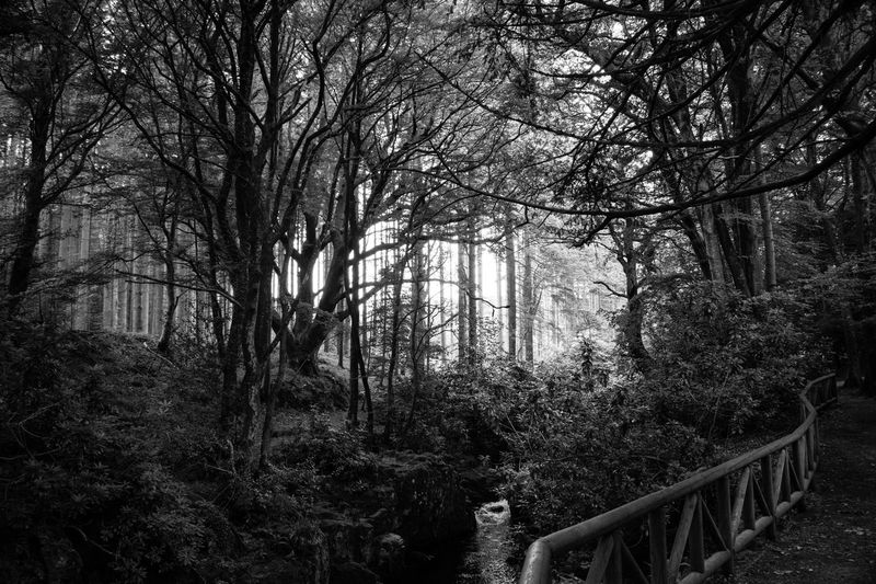 Tree Forest Railing Nature Day Outdoors Beauty In Nature Branch Bare Tree No People Sky Monochrome Tollymore Forest Park Northern Ireland Monochrome Photography Black And White Photography Blackandwhite Eyemphotography EyeEmBestPics EyeEm Best Shots EyeEm Gallery Malephotographerofthemonth Tree Eye4photography  Nature
