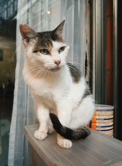 Cat Taiwan Pets Nature 九份