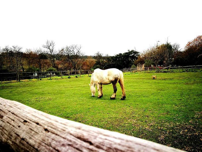 Horse Photography  Horse Life Farm Life Farmland Naturelovers EyeEm Gallery Root44marked