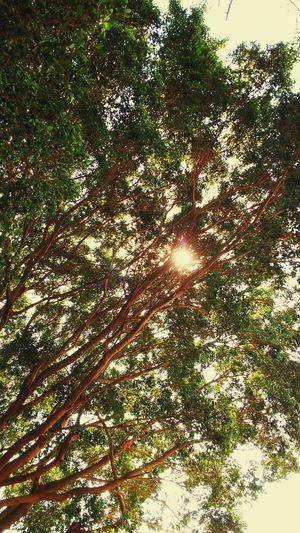 Color Of Life Nature Sun Art Love Photography Maktub Plant Love Photograpic