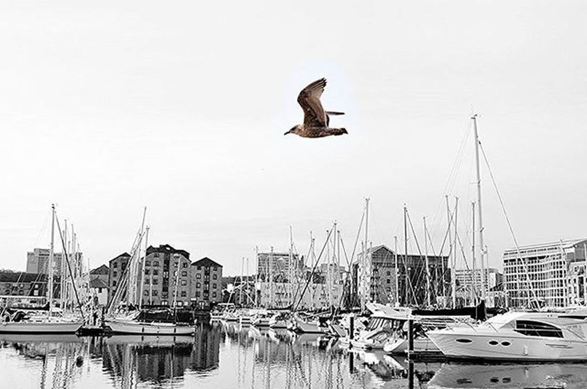 Plymouth Suttonharbour Plymouthbarbican Britainsoceancity Amaturephotography