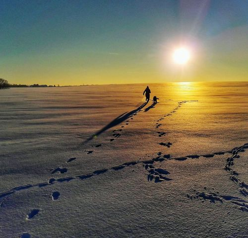 Winter Wonderland Nature Dog Dogs Fun Running Time Winter Wintertime Sunset Sunset_collection Shadow Spuren Im Schnee Animals Love Winter Landscape Sun Best EyeEm Shot Awesome_shots Perfekt Day Best Eyeem Pics Beautiful Day