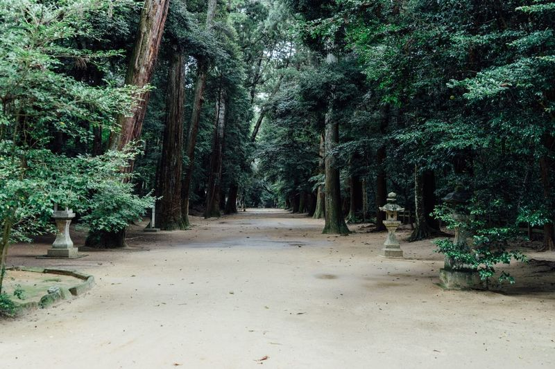 Sanctuary Of Truth Into The Wild Shinto Shrine Japanese Traditional In The Forest Rainy Days Forest Path Trees Branches The Way Forward Beauty In Nature Power In Nature Silence Of Nature No People Travel Photography Travel Destinations Kashima Jingu Mysterious Forest Autumn Atomosphere October October 2017 The Great Outdoors - 2018 EyeEm Awards