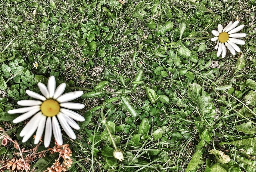 Nature Photography Photography Beauty In Nature Flower Head Petal Fragility Beauty In Nature High Angle View Wildflower OpenEdit Personal Perspective