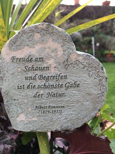 Outdoors Mr. Albert Einstein Say....