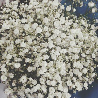 일요일오후2시 드라이플라워디퓨저 안개꽃 말린꽃 고터 꽃시장 오픈하자마자 안개꽃한다발사서 막차타기 휴