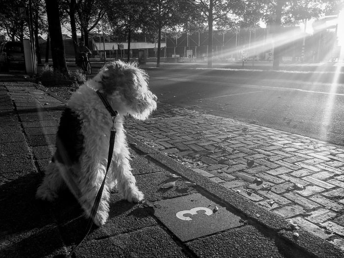 My Dog Enjoying The Sun Dog One Animal Domestic Animals Blackandwhite Photography Blackandwhite Animal Themes Pets Black And White Snapshots Of Life Sunrise Outdoors Streetphotography Street Photography Streetphoto_bw The Week On EyeEm No People