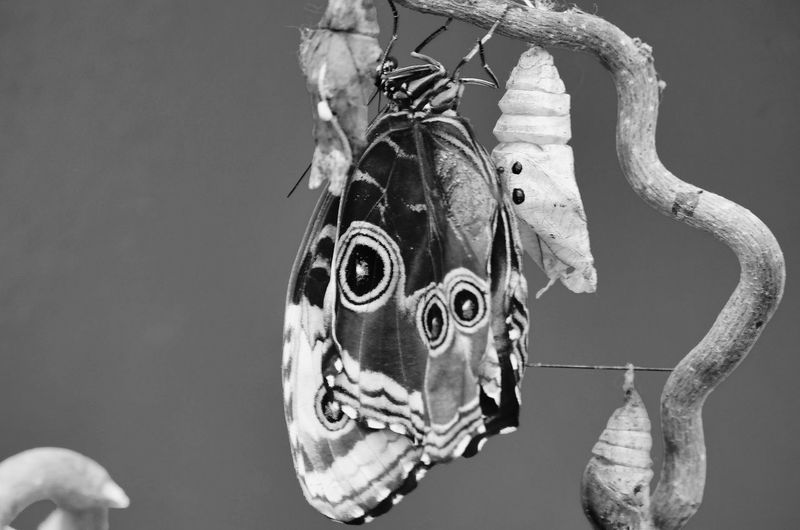 Close-up of butterfly hanging on rope