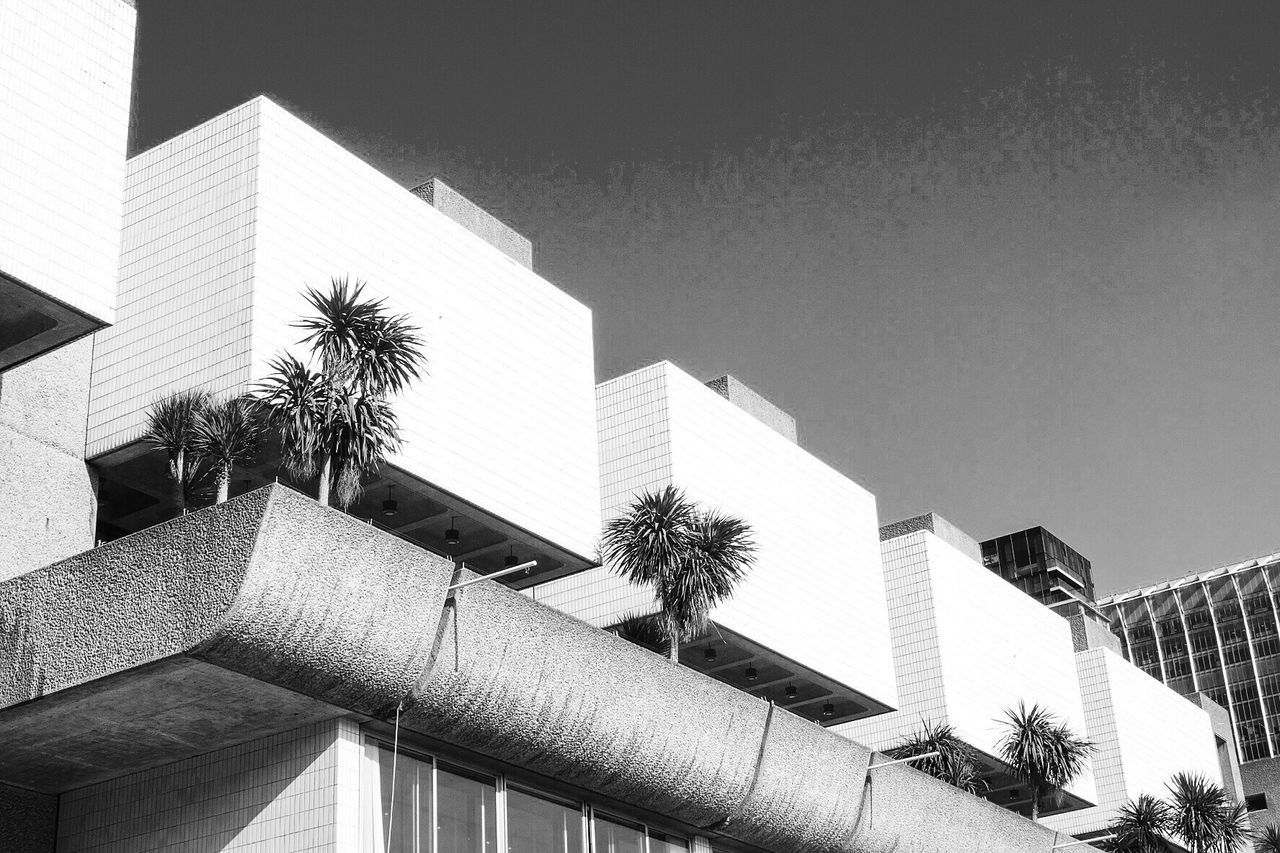 building exterior, built structure, architecture, clear sky, low angle view, outdoors, day, palm tree, modern, tree, no people, growth, city, sky