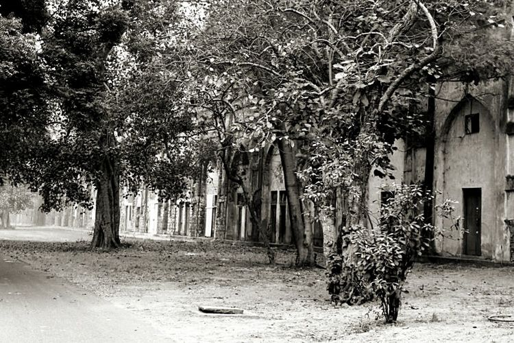 Tree Architecture Outdoors No People Day Built Structure Nature Building Exterior Redfortnewdelhi India Blackandwhite Empty Road Overlooked Beauty EyeEmNewHere EyeEmNewHere