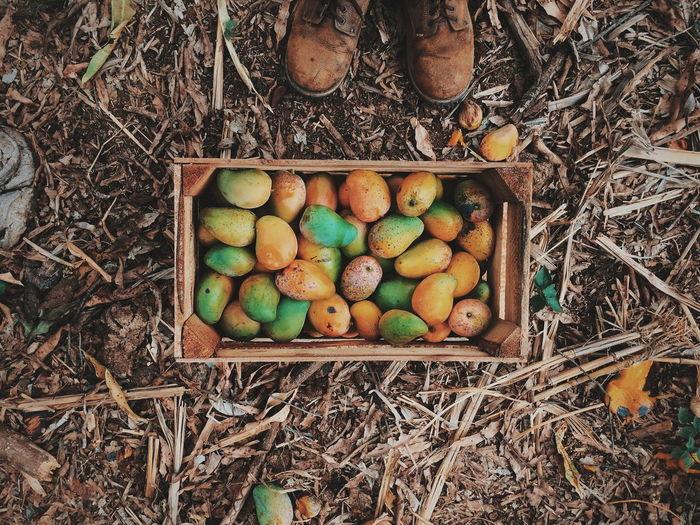Fruit Fresh Fruit Tree Mango Foodphotography Easter Egg Carton Multi Colored High Angle View Easter Egg Egg Basket Food And Drink