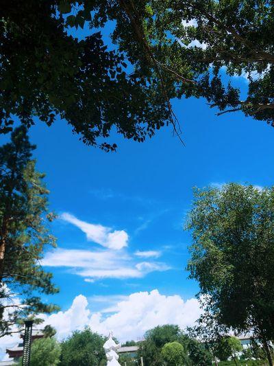 Blue Tree Nature Sky