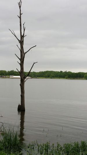 Some one lost their fish line + lure. Tree Lake Treeinwater Lostlure Dyingtree