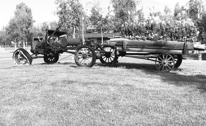 1919 Ford Model T Transportation Tree Bicycle Land Vehicle Mode Of Transport Grass Park - Man Made Space Parking Day Relaxation Outdoors Growth Stationary Tranquil Scene Parked Cycle Tranquility Solitude