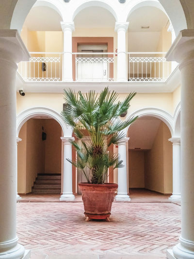 inner courtyard with palm tree Arch Architectural Column Architectural Feature Architecture Backyard Building Built Structure Column Courtyard  Day Entrance Façade Growth No People Ornate Plant Sunset