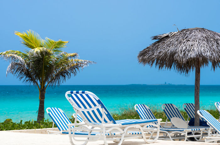 Dream beach with Palm and sun lounger in Cayo Santa Clara in Cuba Azure Beach Beautiful Blue Caribbean Copy Space Cuba Dream Dreamlike Holiday Horizon Leisure Activity Lounge Nobody Palms Relax Relaxing Scenery Scenics Sky Sun Sunlounger Touristic Turquoise Water