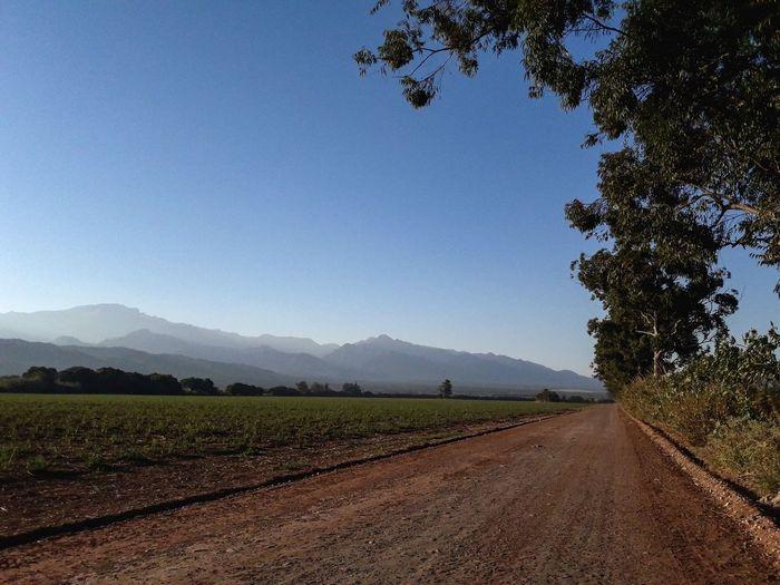 Norte Argenrino Noa Jujuy Tree Mountain Rural Scene Agriculture Clear Sky Field Crop  Sky Landscape