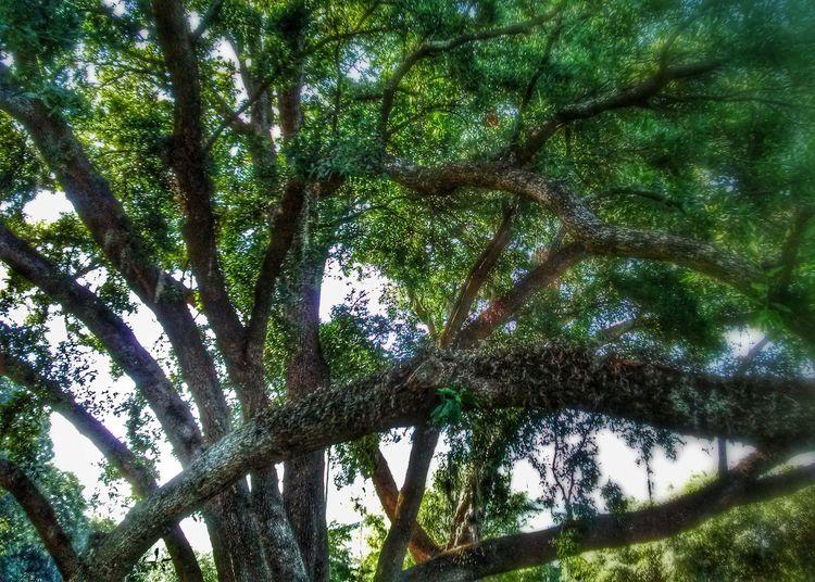 For Tarzan's amusement. Tree Nature Landscape TreePorn