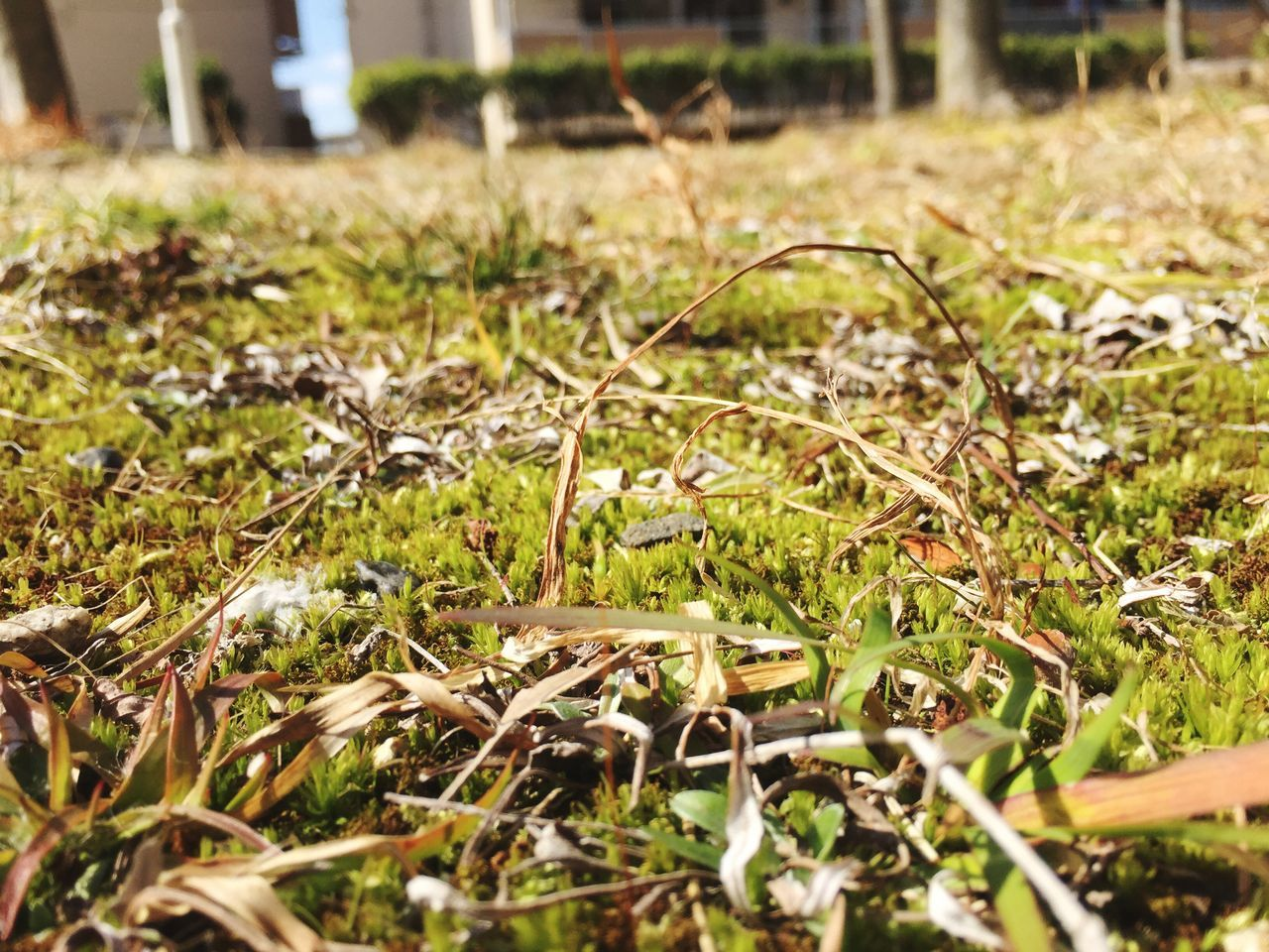 selective focus, nature, grass, field, growth, no people, day, outdoors, close-up, beauty in nature, freshness