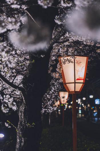 Illuminated lanterns hanging on tree trunk at night