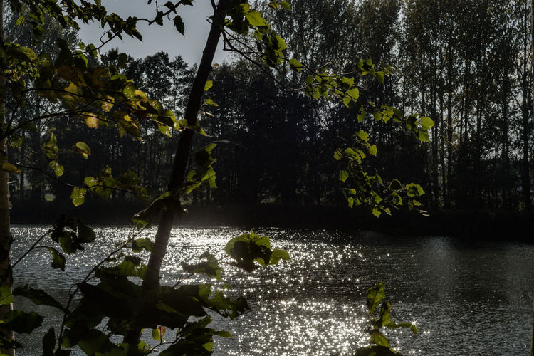 Am Stau Water Plant Tree Nature Lake Beauty In Nature Growth Day Tranquility Outdoors Reflection No People Scenics - Nature Forest Land Leaf Waterfront Branch