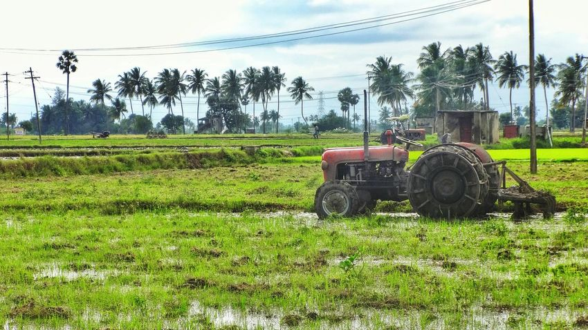 A farmer's best friend 🚜 400th post 🙌🙏 thank you everyone for your support 😊 Field Tractor Farming Village Coconut Trees Rural Scenes Landscape Nature EyeEm Nature Lover 400thpost Trees Rice Field Cultivation Plough Vehicle No People Composition Tamilnadu Tadaa Community Greenery Farmland Agriculture Color Photo Landscape_Collection Gogreen