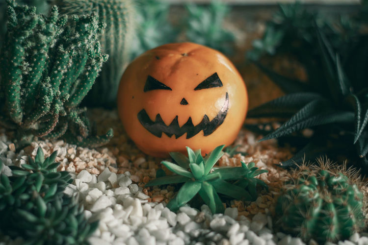Close-up of pumpkin on plants during halloween