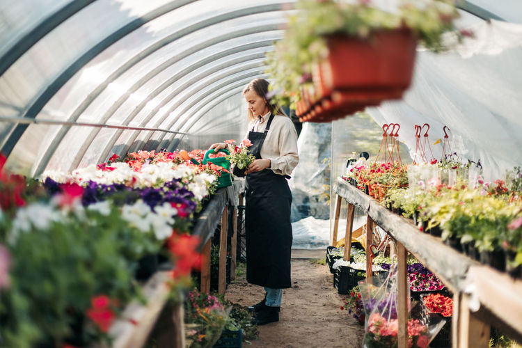 Professional girl gardener grows flowers in a greenhouse. daily care of plants