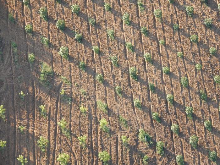 Full frame shot of trees on field