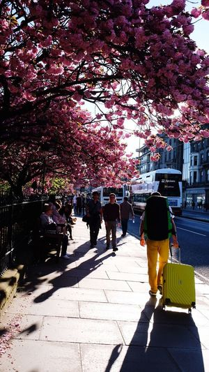 Street in Edinburgh Sunset Warm Weather Warm Summer Trees Flower Real People Sunlight Shadow City Nature Tree Adventures In The City Walking Plant Street Day Men City Life Adult Summer Road Tripping
